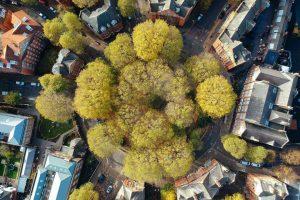 Lo que funcionó esta semana: ciudades boscosas, bolsas comestibles y más noticias positivas