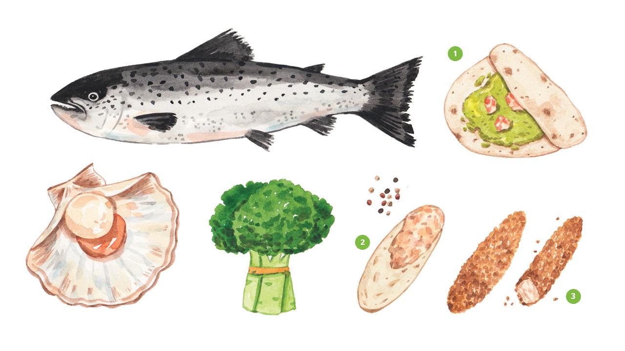 Ilustraciones realistas de pescado, vieira, brócoli, tacos de camarones, crema de salmón y palitos de pescado que contienen colina.