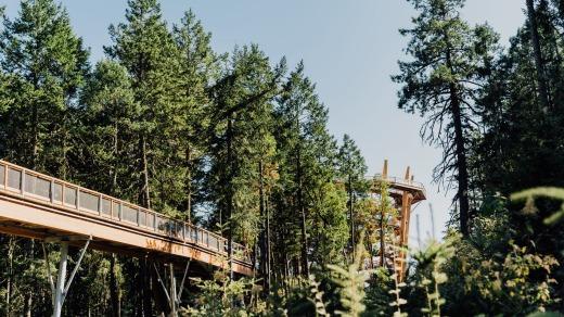 La pasarela elevada de 600 metros atraviesa el bosque de Arbutus y Douglas Fir.