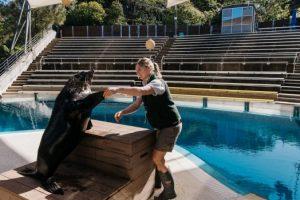 COVID-19 y el zoológico: por qué los animales en el zoológico de Taronga de Sydney carecen de humanos durante los encierros